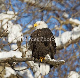 Friday_Eagles_7D-40