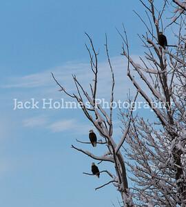Eagle_Monday5D-492