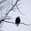 Eagle_Monday5D-22