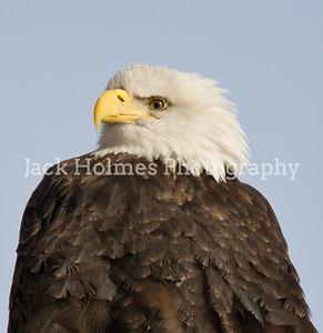 Friday_Eagles_7D-82
