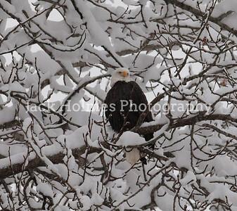 Eagle_Monday5D-4