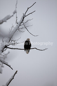 Eagle_Monday5D-24
