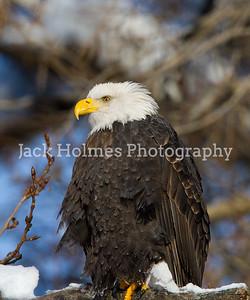 Friday_Eagles_7D-68