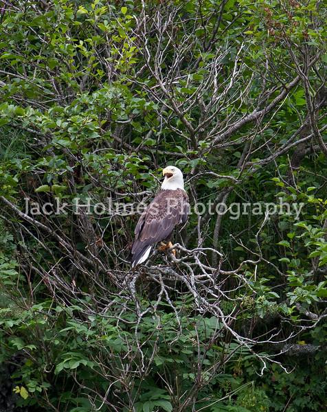 Katmai - Wildlife and Landscapes