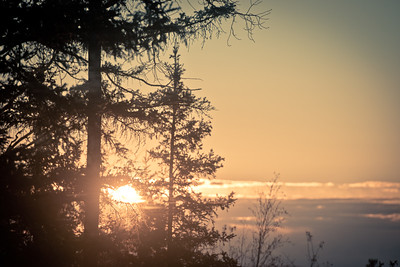 Spruce Sunset