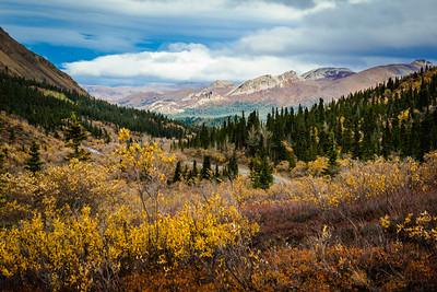 Denali Autumn