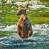 SubAdultGrizzlyWet-AlaskaD700_2105_DxO
