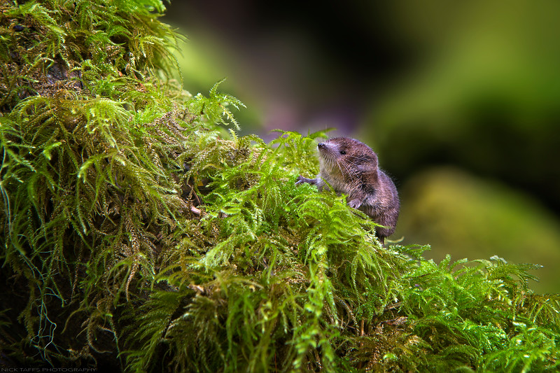 Forest Friend - Vancouver Island, British Columbia