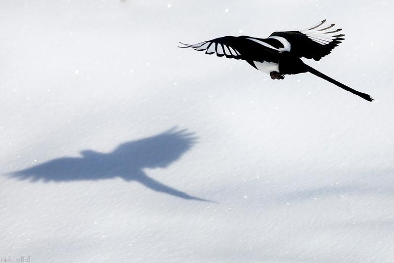 Snow Angel - Carbon, Alberta