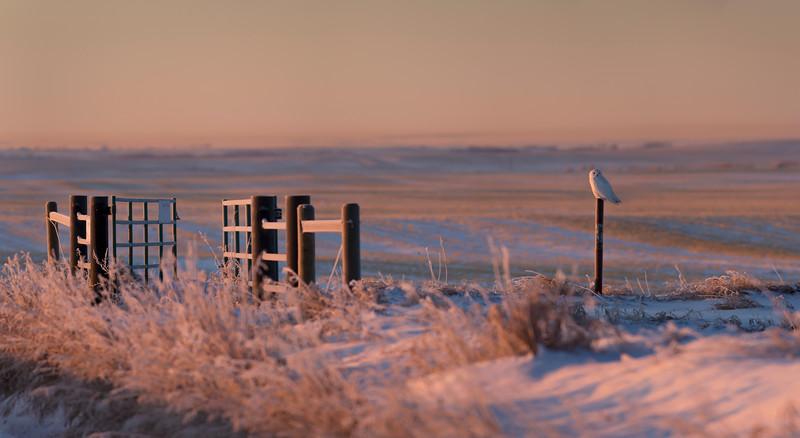 Morning Glow - Beiseker, Alberta