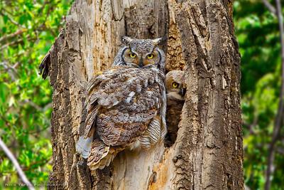 Two Owls - Calgary, Alberta