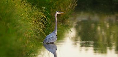Early Bird - Airdrie, Alberta