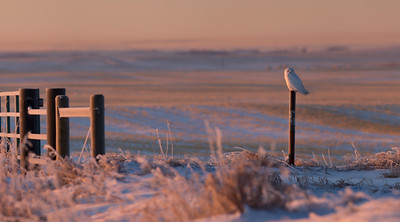 Morning Glow II - Beiseker, Alberta