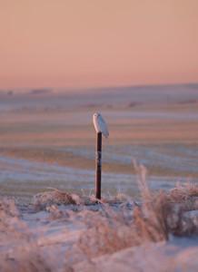 Spotted - Beiseker, Alberta