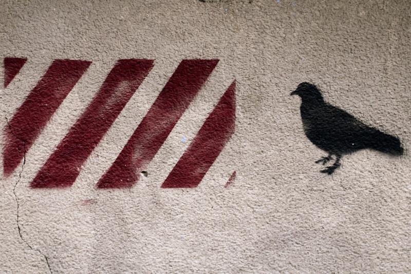 20060306-bird on the wall