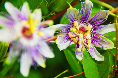 """Wild Flower at Lake Lanier"""