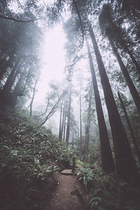 steep ravine iv | marin county, california