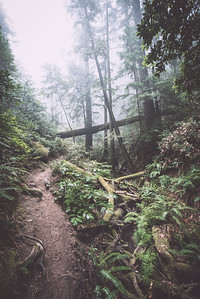 steep ravine v | marin county, california