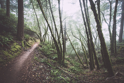 steep ravine vi | marin county, california
