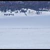 A Herd of over 150 Elk (specks in the snow).