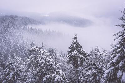 wonderland i | humboldt county, california