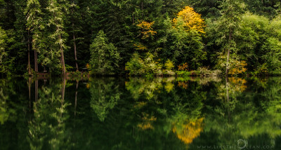 Reflecting on Reflection