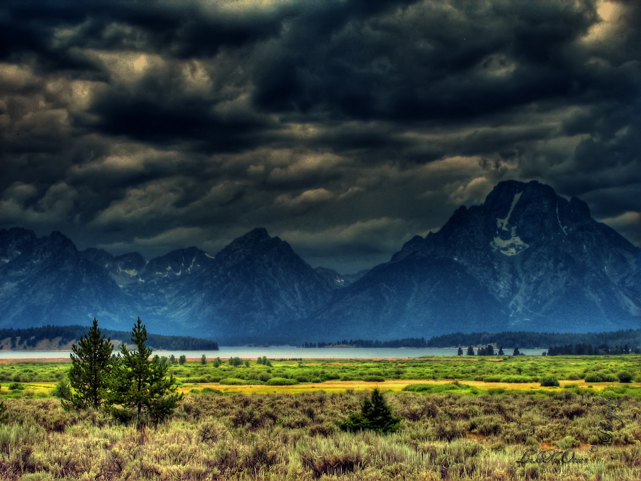 The twin trees @ the Tetons