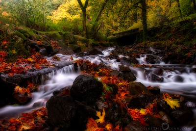 The magic of Autumn I love fall. I love the cool, crisp air and the way all the trees change color. I love the smell of the fallen leaves, their the crunching noise when dry and the beauty they add to any autumn scene dancing in water.  For a season that is preparing to get into hibernation, Autumn is just truly magical. Sure, everything is dying, but even that happens with so much grace and beauty. Is the magic of Autumn due to the colors or is it the art of letting go …