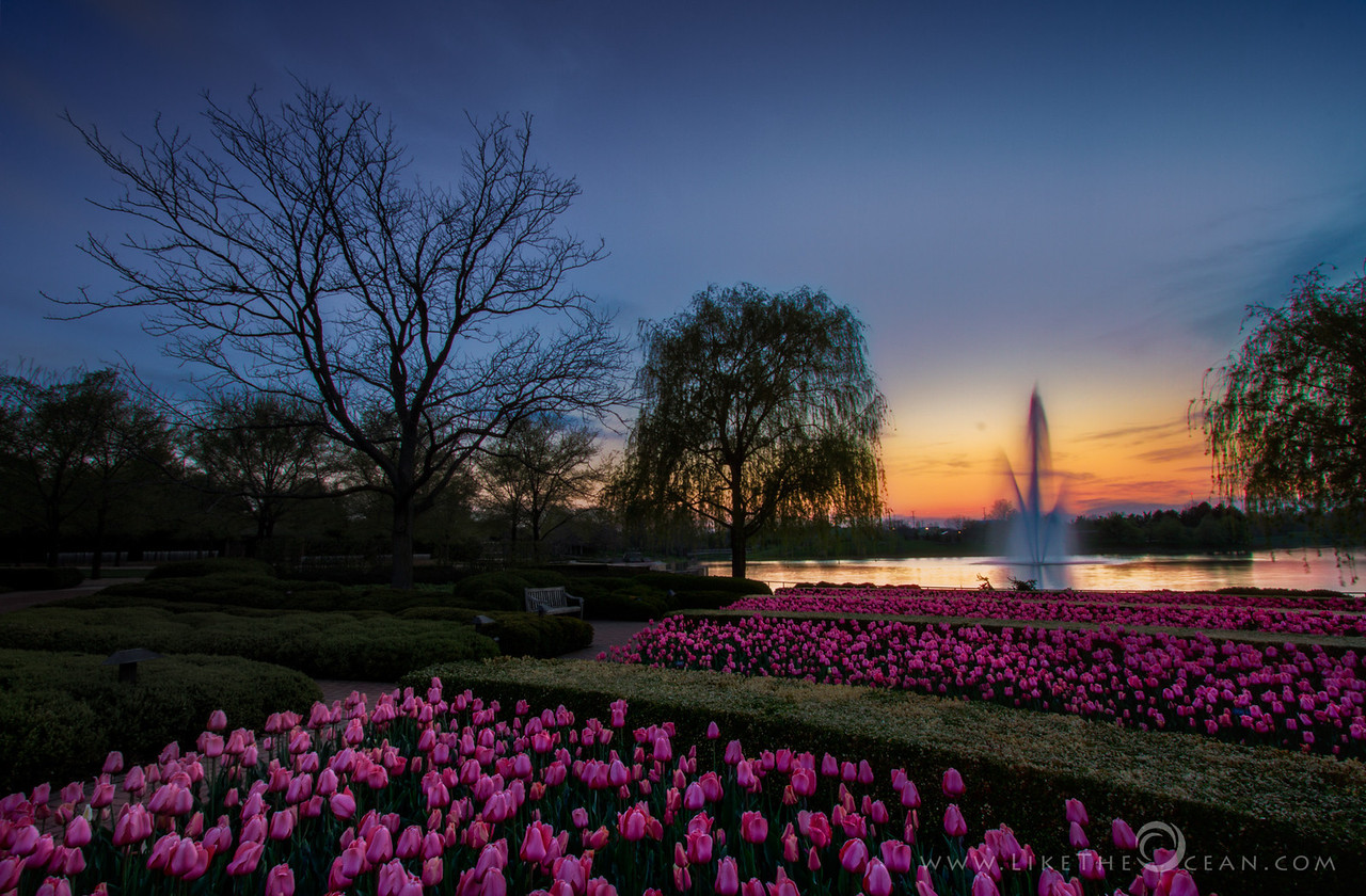 Sunset - by the Tulips