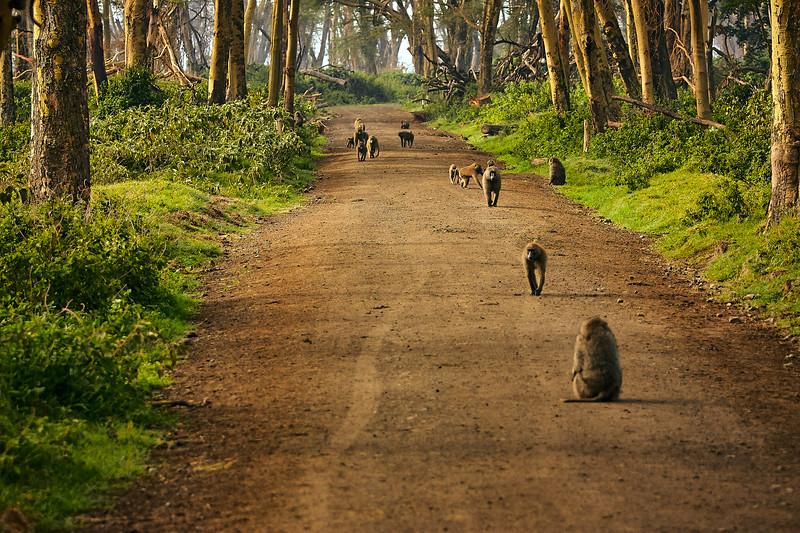Baboon path