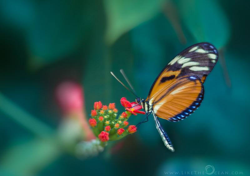 Butterfly Flutter by
