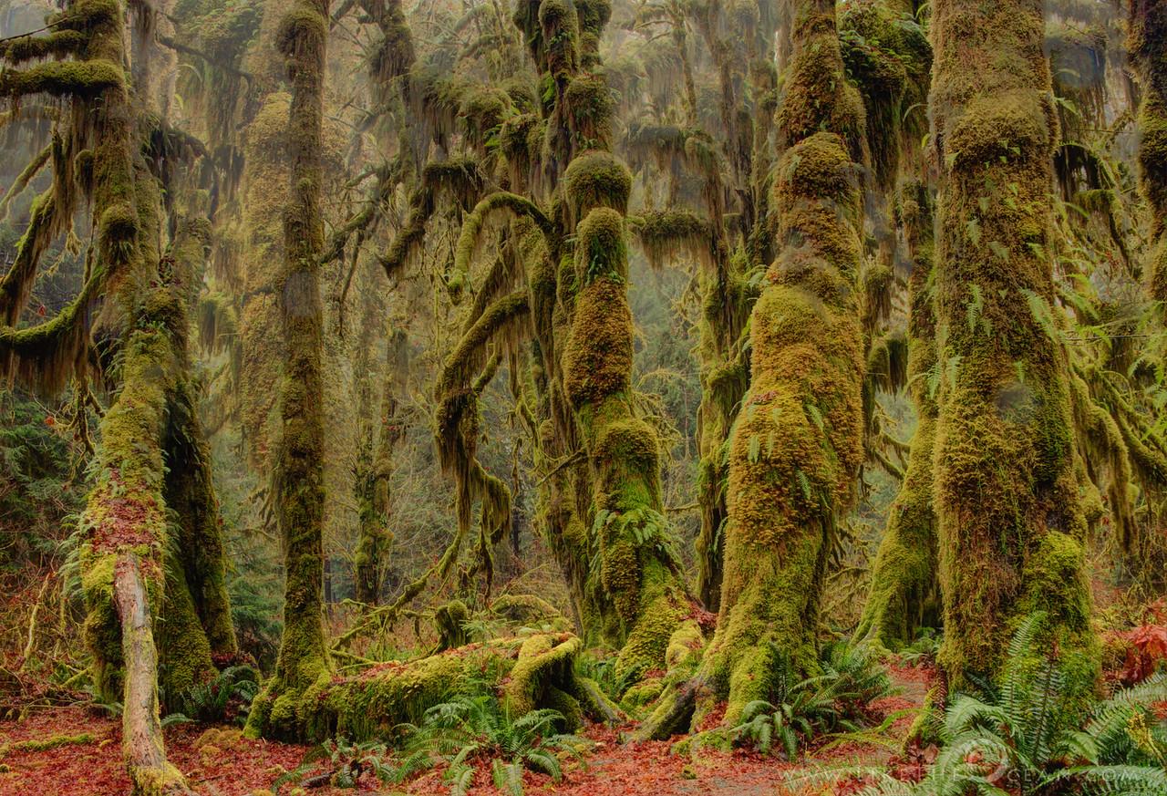 Enchanted Rainforest of Hoh