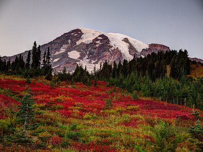 Fall color at Paradise on Mount Rainier