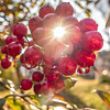 sun shine peeking through wild berries