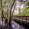 nature at morrison springs florida