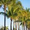 miami florida beach scenes on a sunny day