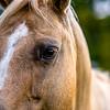 horse animal posing on a farmland at sunset