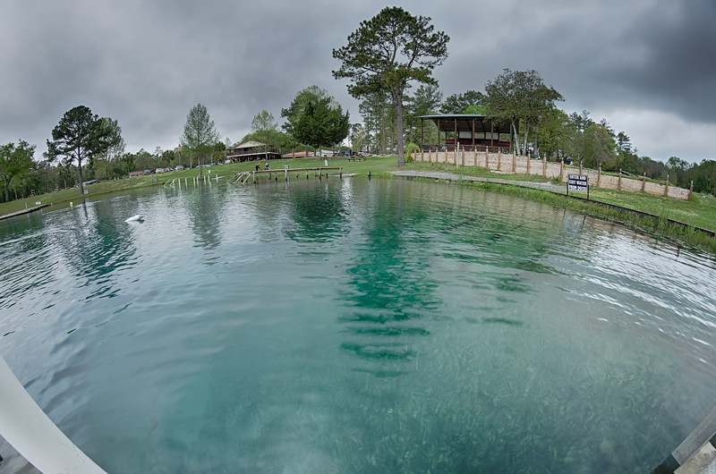 nature at vortex springs florida on rainy day