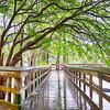 public park at morrison springs floridaa