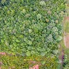 aerial over thick forest