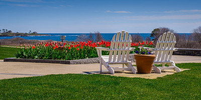 Tulips at Inn By The Sea