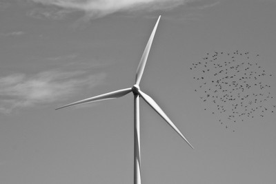 Flocking birds and the turbine.  Hull, MA.