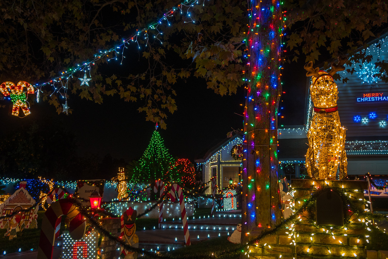 colorful lights on thoroughbred street - Thoroughbred Christmas Lights