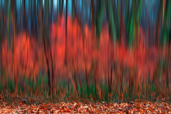 Woods Aflame