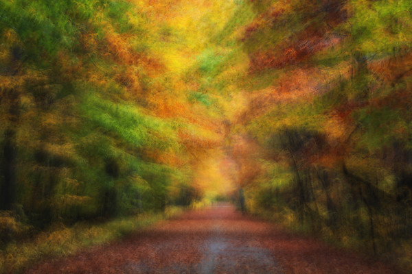 Dreamy Autumn lRoad