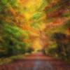 Dreamy Autumn lRoad