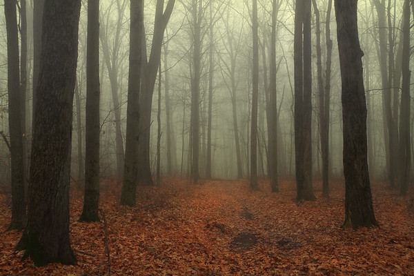 Foggy Morning in the Woods