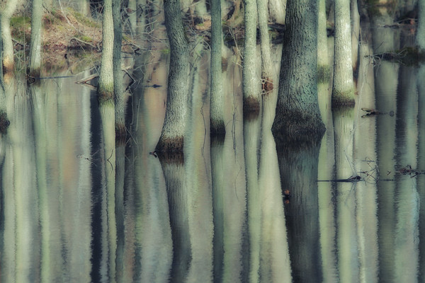 Rondeau Reflections