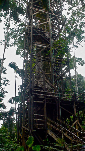 Tower to see forest view, Sacha Lodge, private reserve