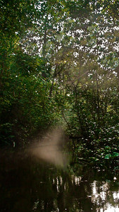 Sunlight through the forest, Yasuni National Park :)